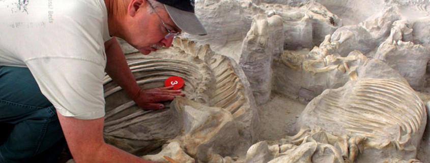Ashfall Fossil Beds