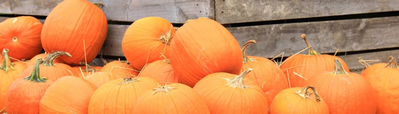 Poppy's-pumpkin-patch